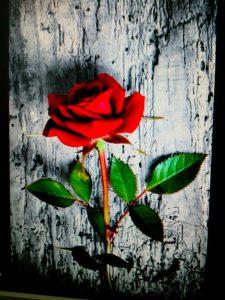 La rosa del madero