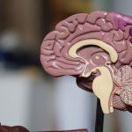 Lee más sobre el artículo La mente cognoscitiva