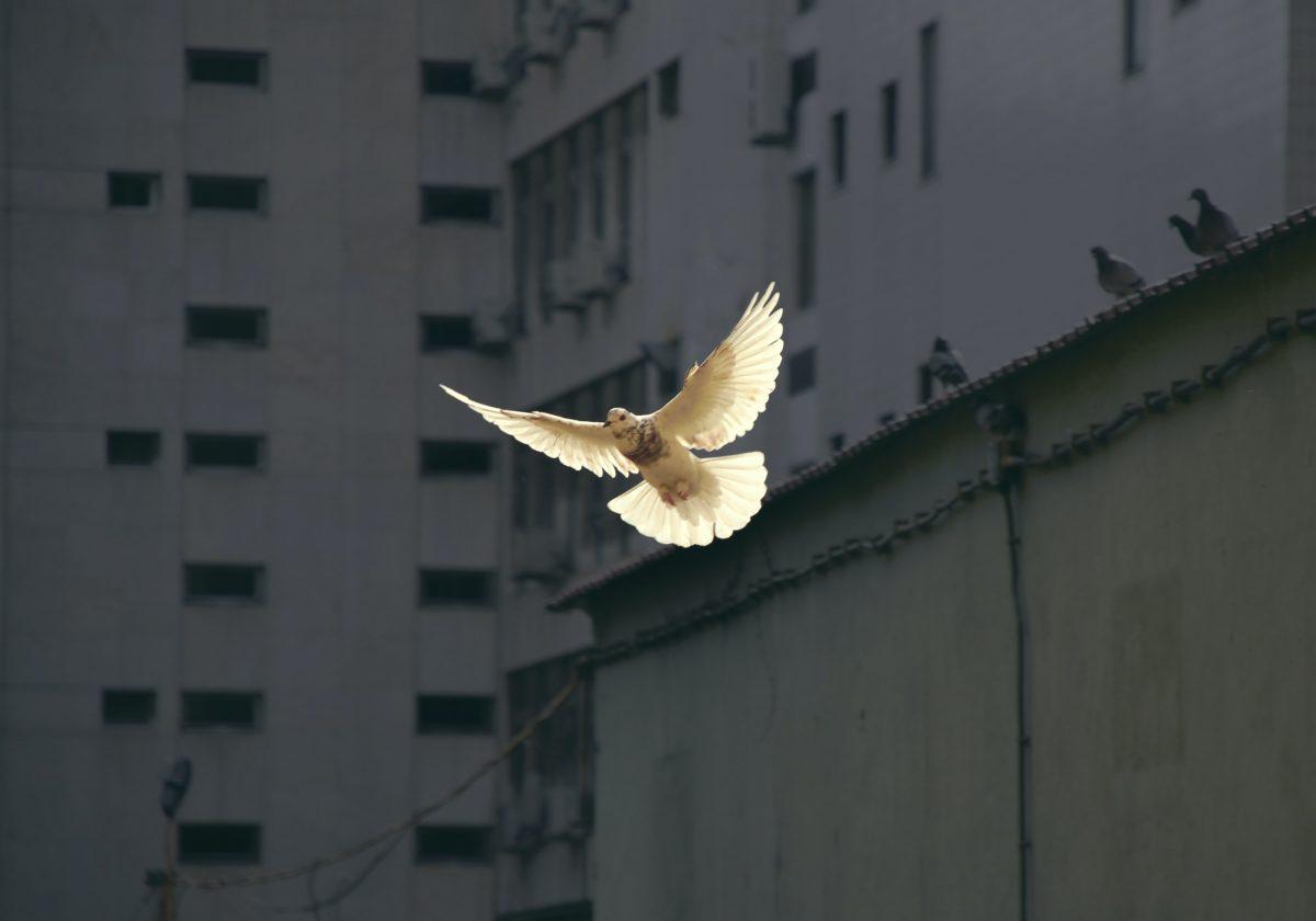 En el Día Internacional de la Paz: 21 de septiembre