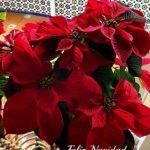 Lee más sobre el artículo Saludo navideño