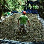 Lee más sobre el artículo Una raya de coca peruana